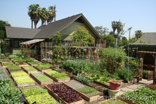Urban Backyard Farmer :  farmer My definition of garden, urban farm, & micro farm  Caszs