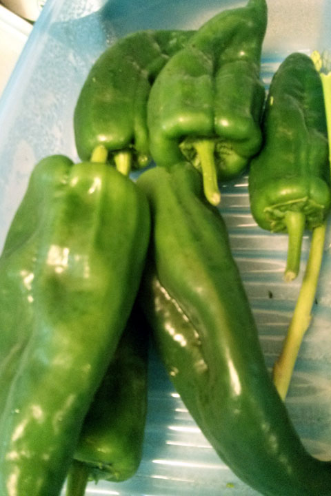 Poblano peppers from our land. July 2014.