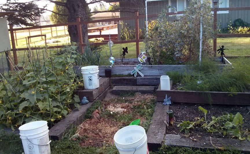 The original raised bed that started this crazy Grow Food Not Lawns effort. Now ready for successive planting.