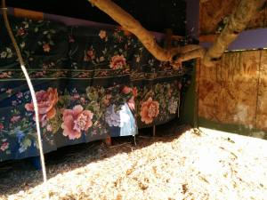 Field-expedient nesting box curtains.