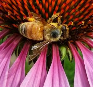 messedupwingbee2