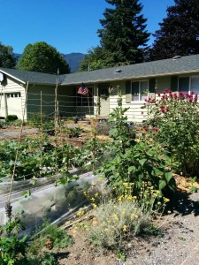 The Thrasher Micro Farm on the cusp between June and July tended by an Old Soldier.