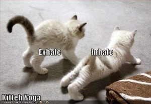 Kittens-Yoga-Class-Inhale---Exhale---Cat-Position-Breathing-Exercise---Pranayama