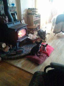 The Puppies (No. 3) Love Fire Season.