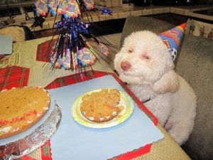 Dogs and Birthdays go together...